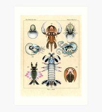 Fossil Plate Art Print