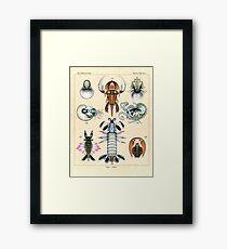 Fossil Plate Framed Print