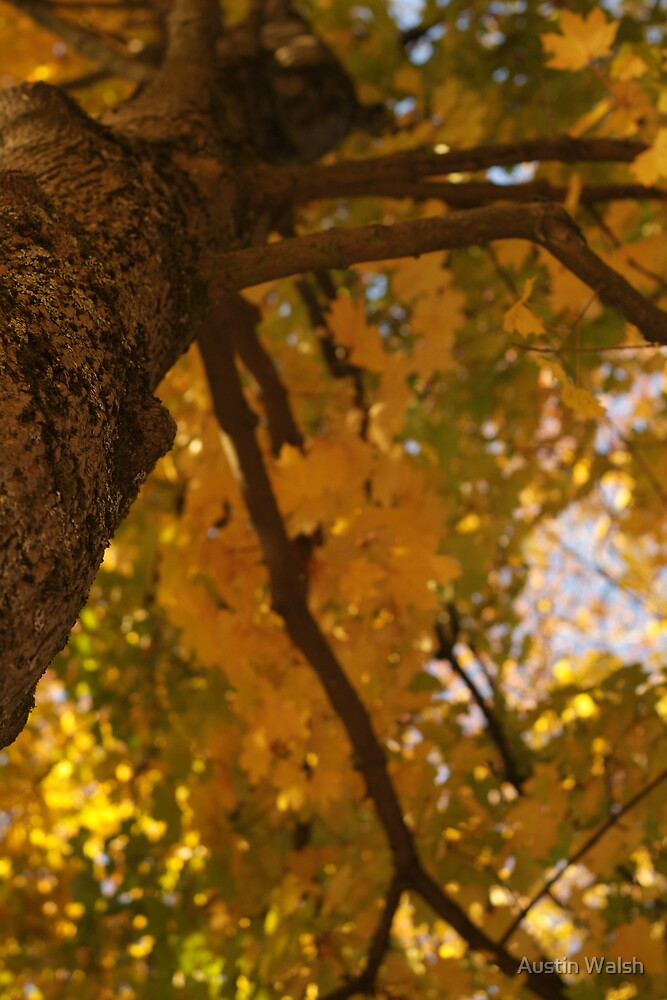 Looking up a Tree by Austin Walsh