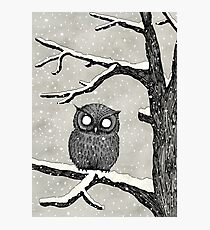 Owl in the Snow Photographic Print