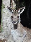 NDVH Australia Zoo 3 by nikhorne