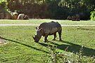 NDVH Australia Zoo 4 by nikhorne