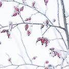 Winter Zauber der Hagebutten  by Aviana