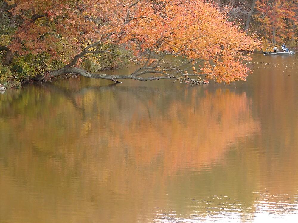 Reflection...... by Glen Baker