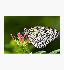 Rice Paper Butterfly Photographic Print