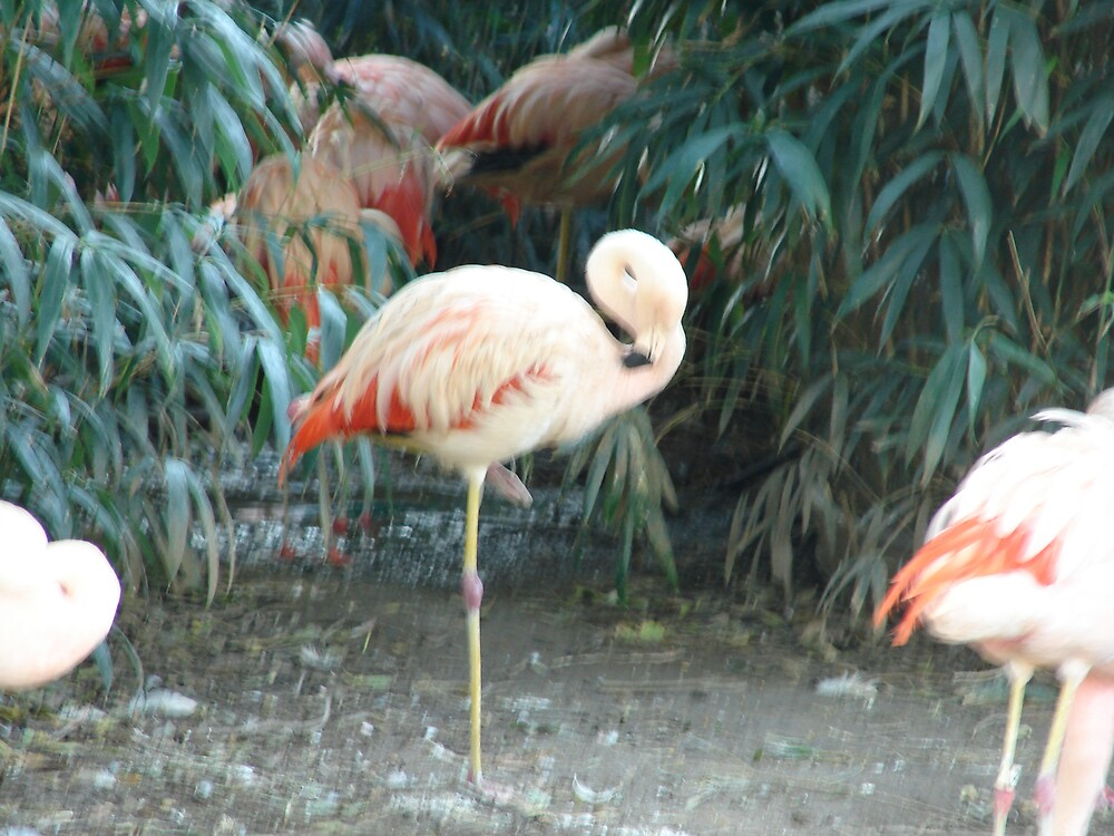 Zoo Flamingo by Mudd