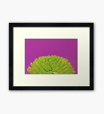 Green Button Spray Chrysanthemum Framed Print