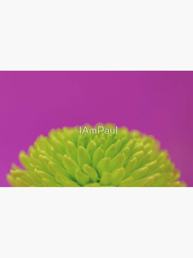 Green Button Spray Chrysanthemum by IAmPaul