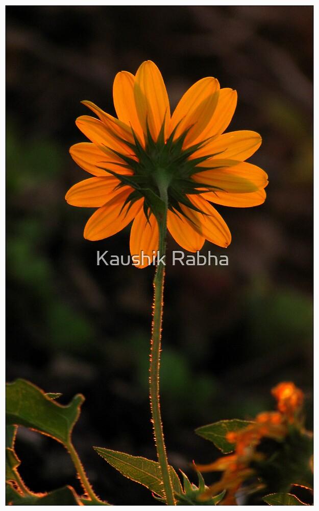 Facing the Sun by Kaushik Rabha
