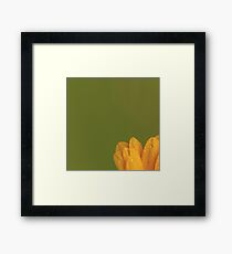 Wet Yellow Petals against Green background Framed Print