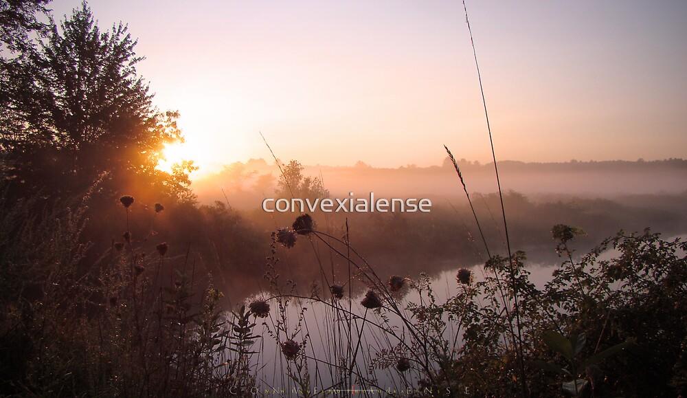 Cadmium Sunrise 4.4 by convexialense