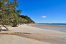 NDVH Fraser Island 7 by nikhorne