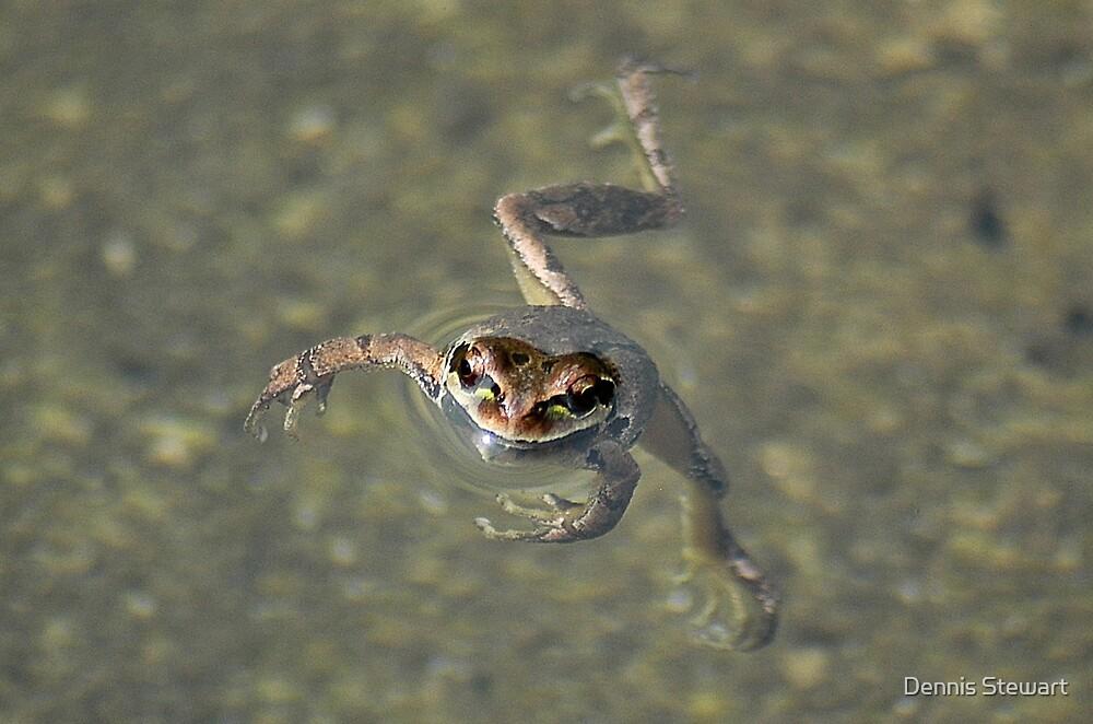 Pond Dance by Dennis Stewart