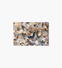 Seashells II Art Board