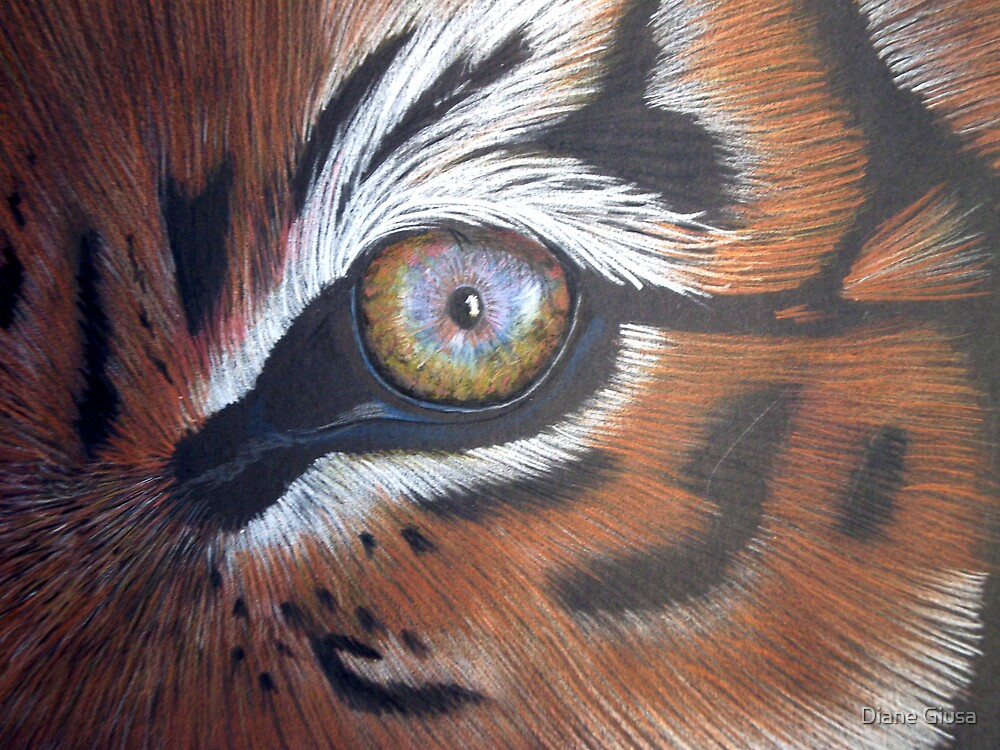 Eye of the tiger by Diane Giusa