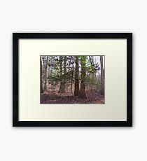 Holly  tree... Framed Print