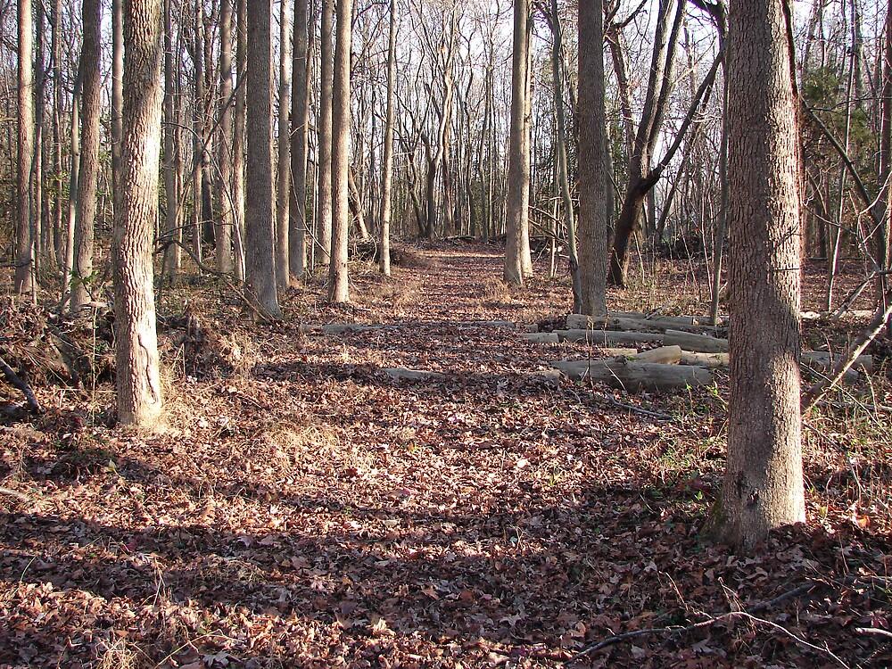 The path..... by Glen Baker
