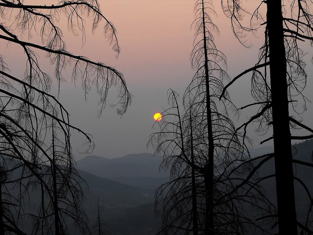 Fire Season by Stephen  Van Tuyl