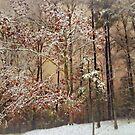 Snowy Evening by Scott Mitchell