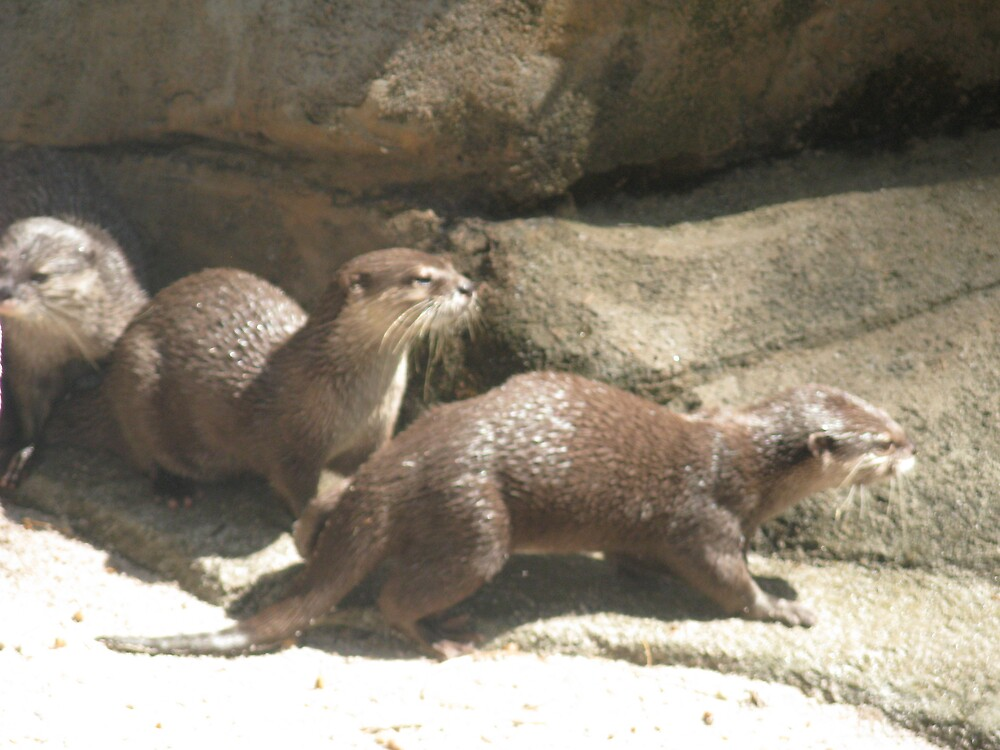 Looking To Make Mischief - Otters by Rebecca Laffar-Smith