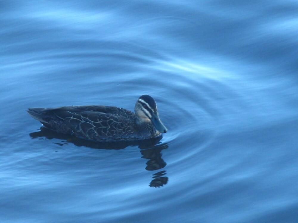 Duck On The Blue by Rebecca Laffar-Smith