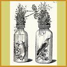 Cabinet of Curiosities - Frederik Ruysch Diorama 1720 - Birds and Armadillo under Glass by katastrophy