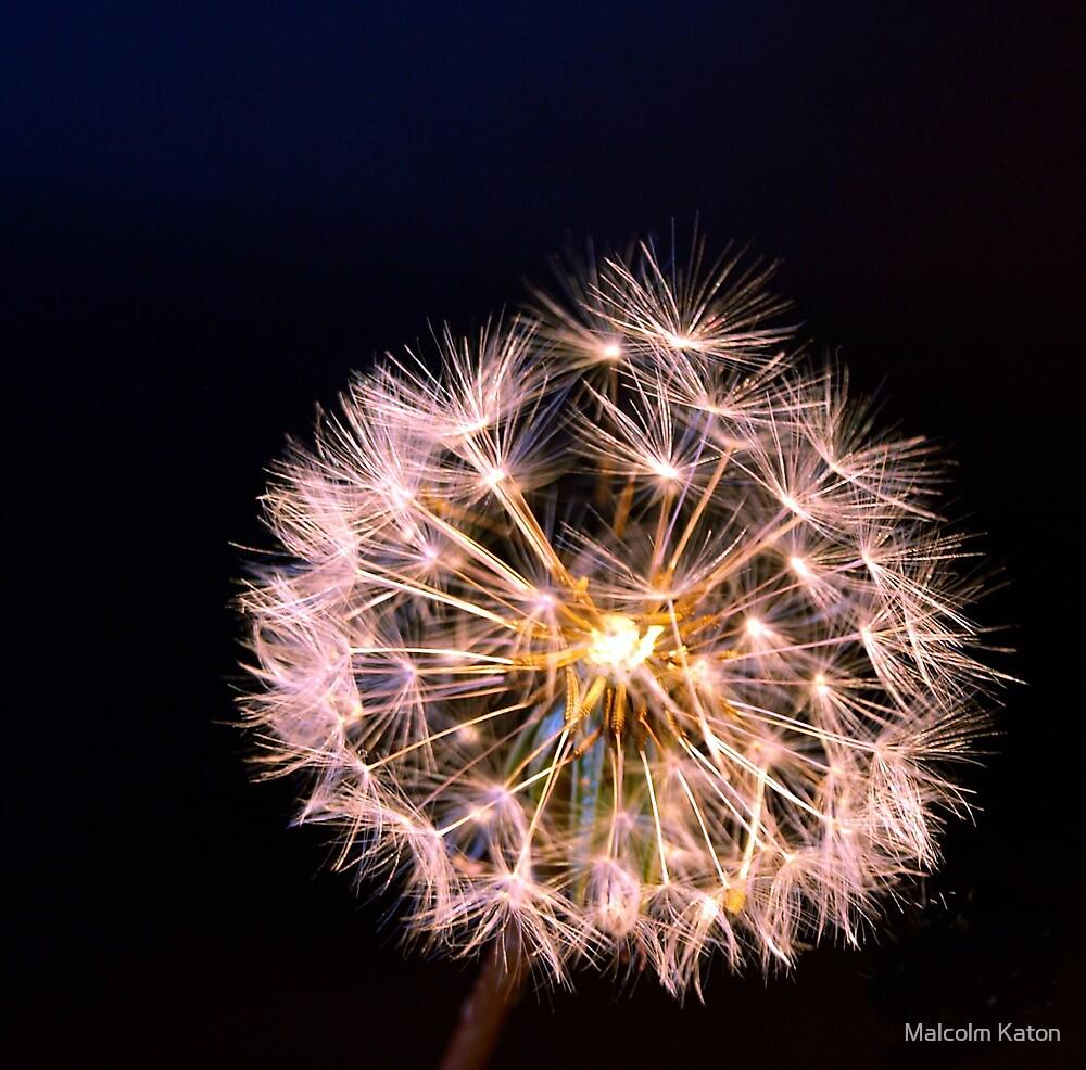 Glowing dandelion by Malcolm Katon