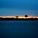 Dawn over sleepy Abberton by newbeltane