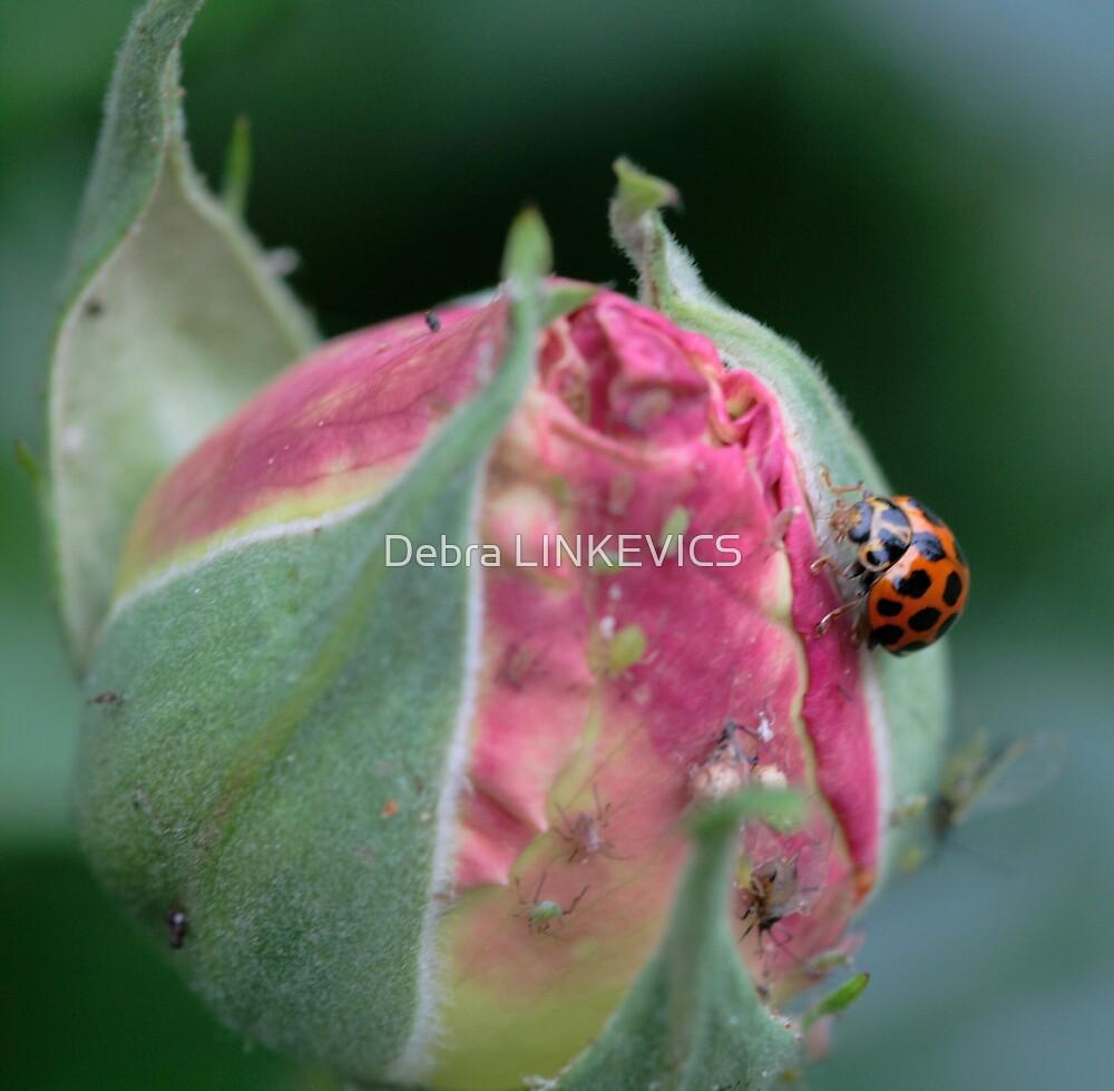 ~Ladybug Feast~ by Debra LINKEVICS