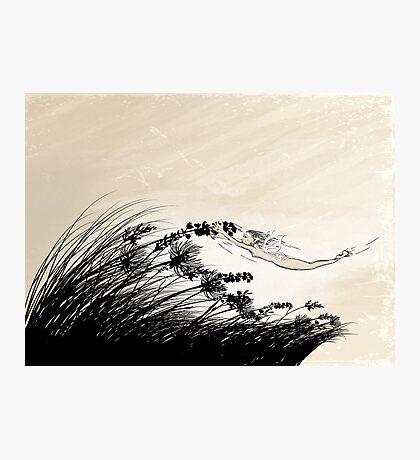 Catching Wind Photographic Print