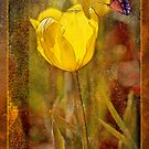 Yellow tulip and butterfly by Sabine Spiesser