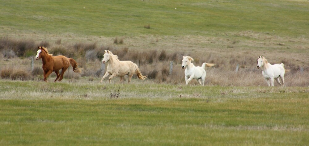 Mares in Spring by springplains