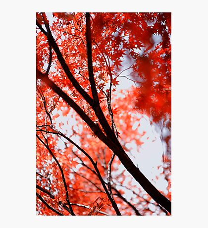 Looking up into another world; Yoyogi Park, Tokyo, Japan Photographic Print