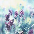 Lavender Vintage Pattern by Aviana