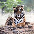 Tigers in the Wild by Pravine Chester