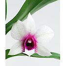 Orchid Blüte by Aviana