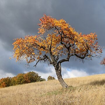 The Last Golden Blush of Autumn in Barda, Romania by ZipaC