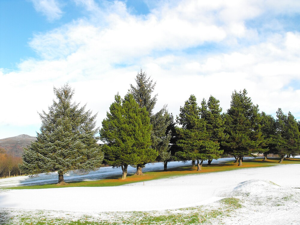 The Tree line by Alan Findlater