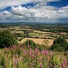 Malvern Hills: July by Angie Latham