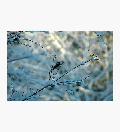 Winter Dreams Photographic Print