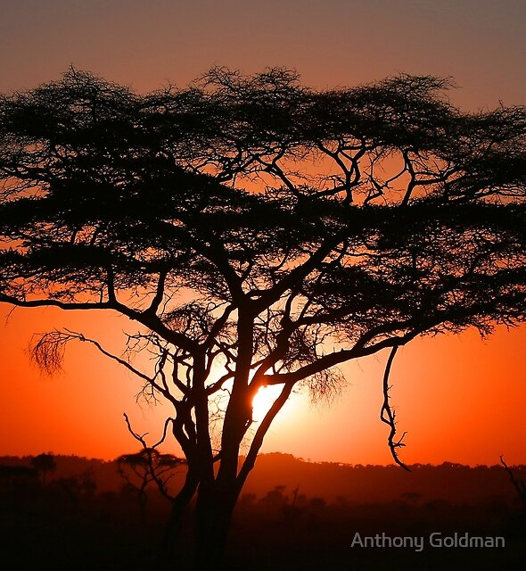 Magical East African Sunrise! by Anthony Goldman