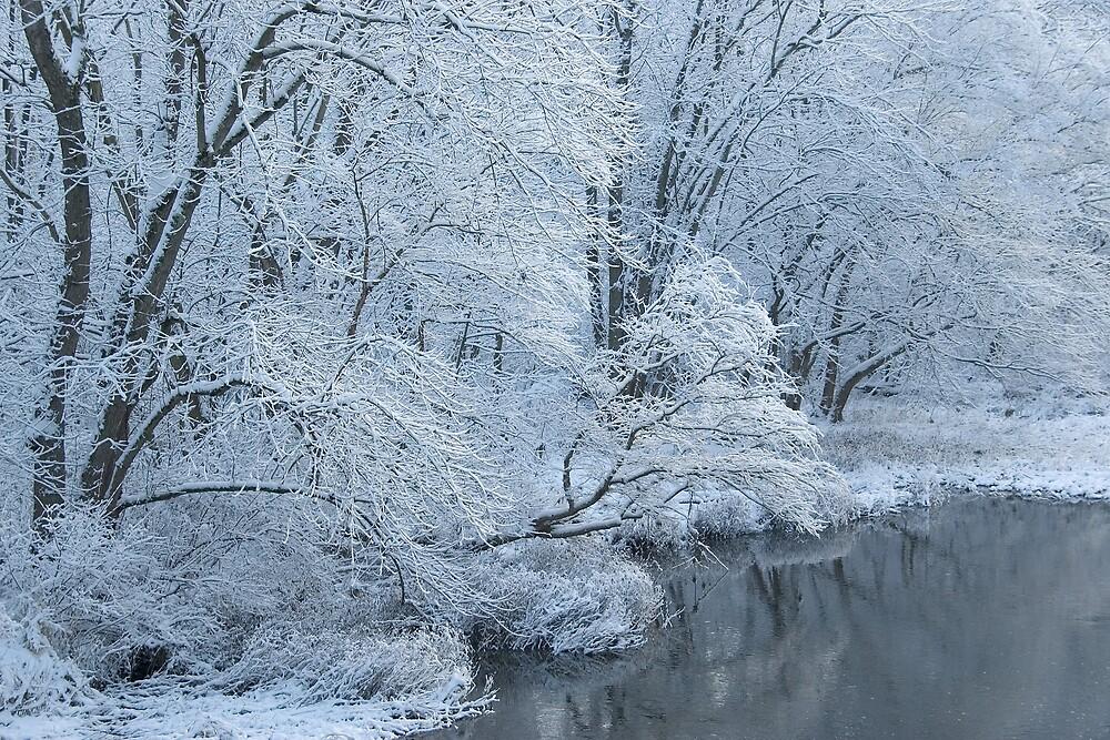 November Snow III by Michael  Dreese