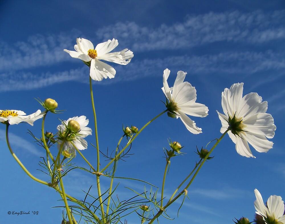 Wild Flower White by Kay  G Larsen