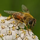 Covered In Pollen by Robert Abraham