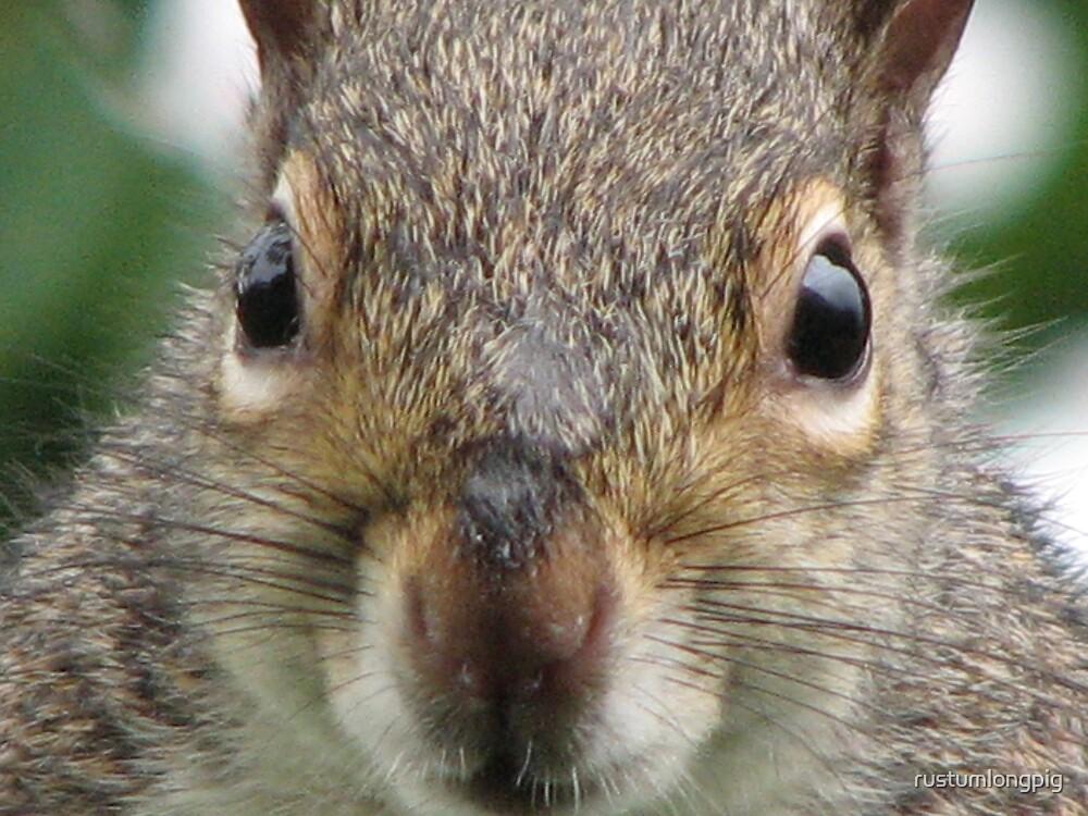 Squirrel eyes by rustumlongpig