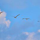 Four Flying Pelicans by Dawne Dunton