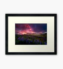 Lupins under the Midnight Sun Framed Print