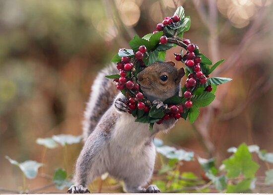 6de0d2c601fda Christmas Squirrel