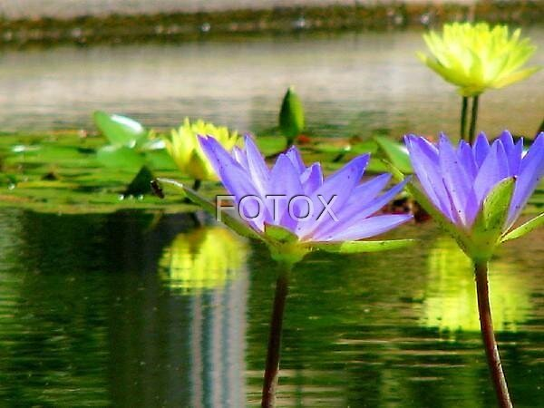 Untitled by FOTOX