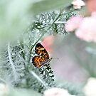 Butterfly Flutter by JulieMaxwell